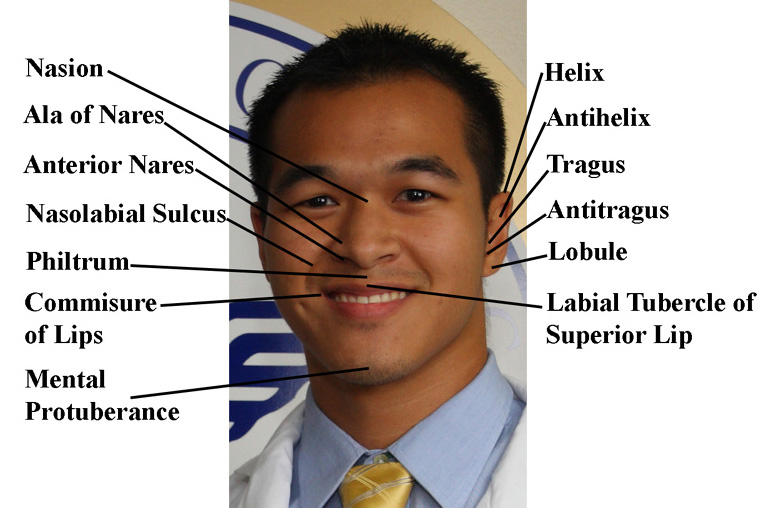 Anatomy of a face